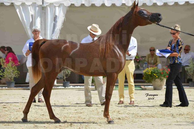 Championnat de FRANCE des chevaux ARABES à Pompadour - PEARL DE DJOON - Notre Sélection - 40