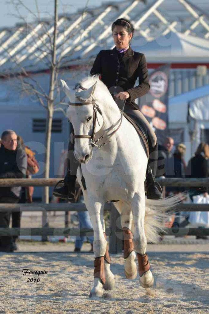 Cheval Passion 2016 - Présentation des LUSITANIENS - Échauffement extérieur -  6