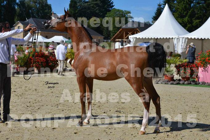 Championnat de FRANCE du cheval ARABE à POMPADOUR 2015 - Classes PROFESSIONNELS - PRIMERIUS EMER - 09