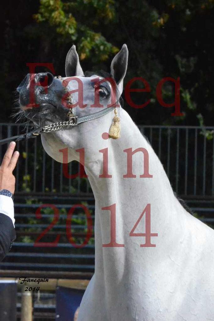 CHAMPIONNAT DE FRANCE  2014 A POMPADOUR - Notre Sélection - Portraits - NADJIK DES AUBUES - 6