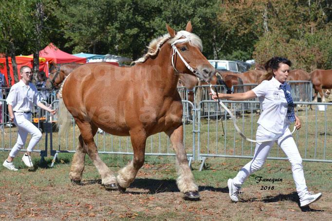 Fête du cheval à GRAULHET le 16 septembre 2018 - Concours Départemental de chevaux de traits - 44
