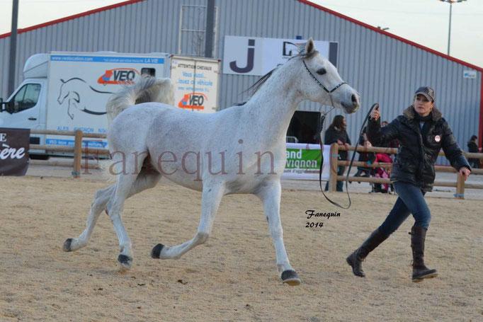 Etalon d'Endurance gris 21