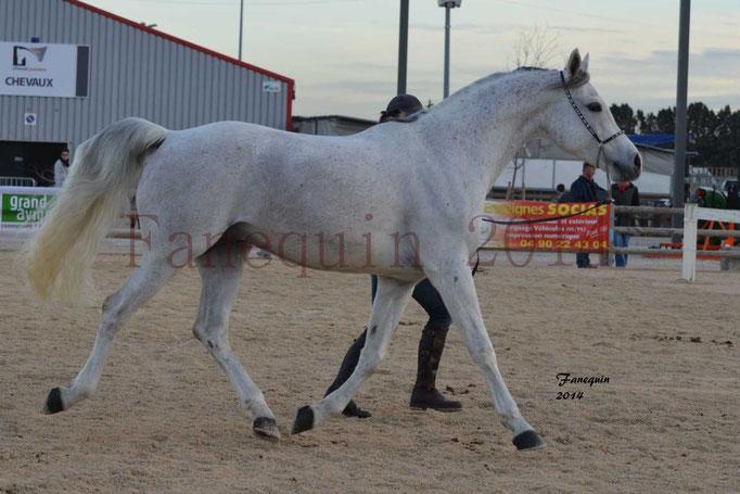 Etalon d'Endurance gris 06