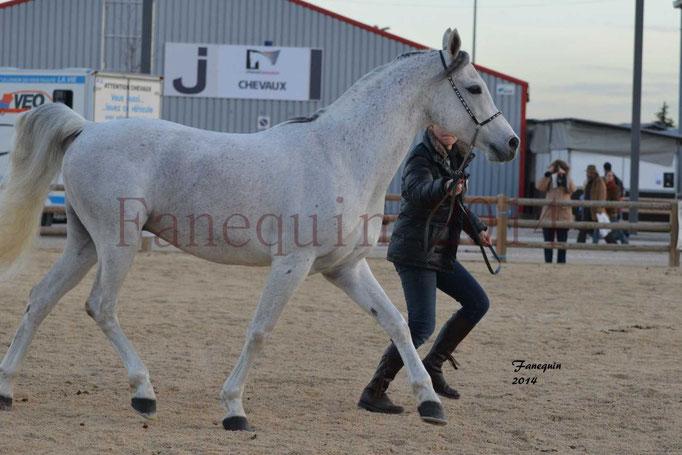 Etalon d'Endurance gris 05