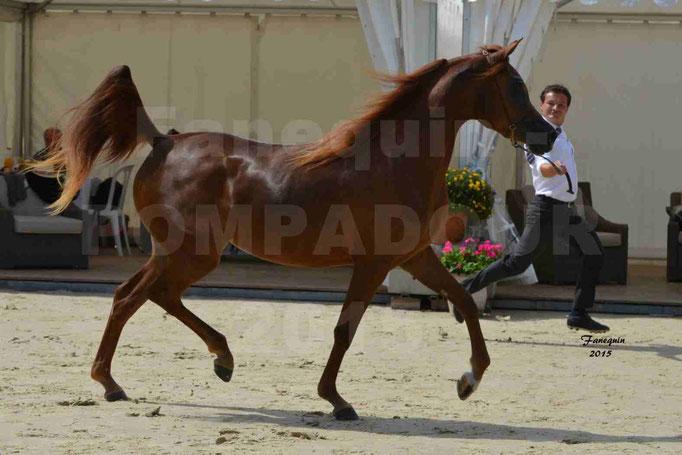 Championnat de FRANCE des chevaux ARABES à Pompadour - PEARL DE DJOON - Notre Sélection - 19