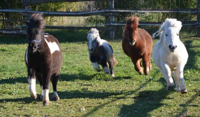 Elevage EL MAGLEP - Groupe de poneys - En Liberté - 11