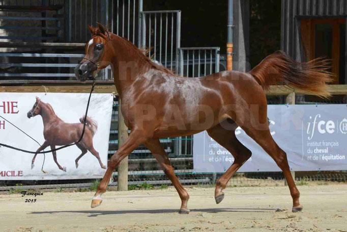 Championnat de FRANCE des chevaux ARABES à Pompadour - PEARL DE DJOON - Notre Sélection - 29