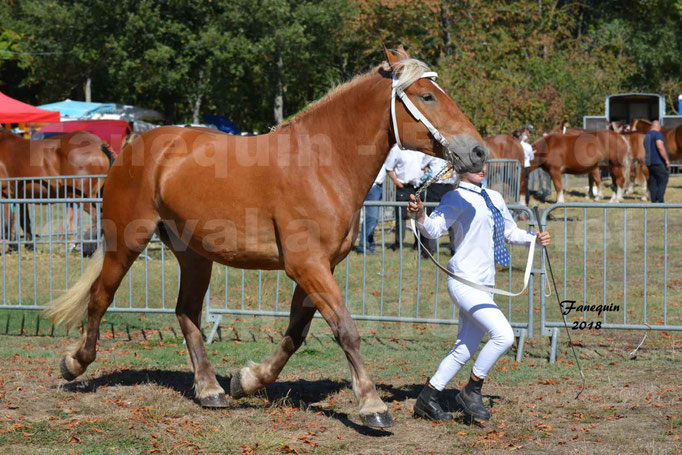 Fête du cheval à GRAULHET le 16 septembre 2018 - Concours Départemental de chevaux de traits - 19