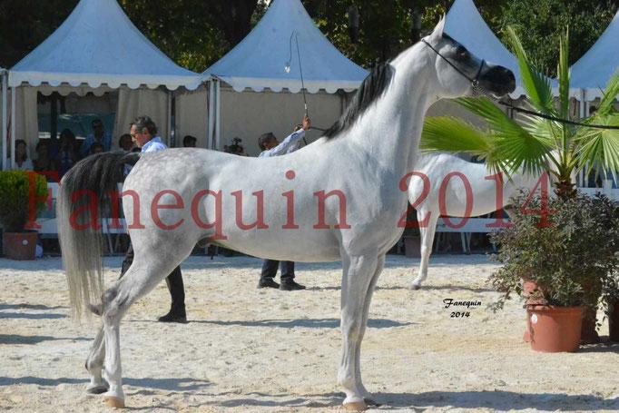 Concours National de Nîmes de chevaux ARABES 2014 - Notre Sélection - NADJYK DES AUBUS - 21