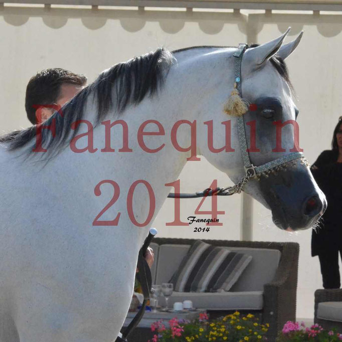 CHAMPIONNAT DE FRANCE  2014 A POMPADOUR - Notre Sélection - Portraits - NADJIK DES AUBUES - 1