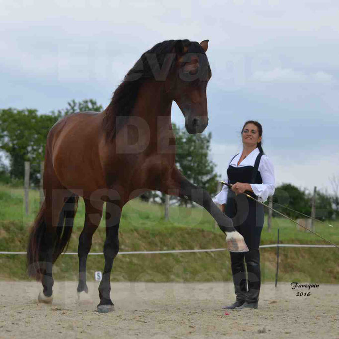 Spectacle de chevaux PRE chez Frédérique VIGNE - 1