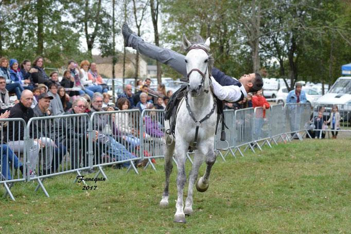 Fête du cheval à Graulhet le 17 septembre 2017 - Démonstration de Voltige équestre - 1