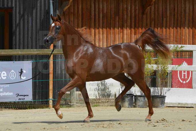 Championnat de FRANCE des chevaux ARABES à Pompadour - PEARL DE DJOON - Notre Sélection - 26