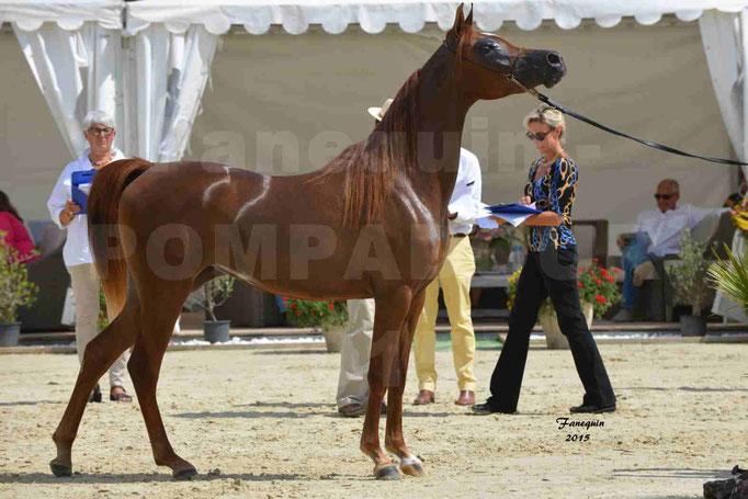 Championnat de FRANCE des chevaux ARABES à Pompadour - PEARL DE DJOON - Notre Sélection - 41