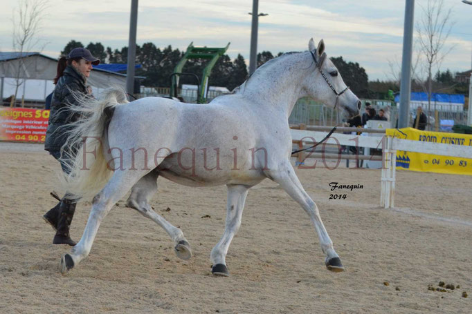 Etalon d'Endurance gris 28
