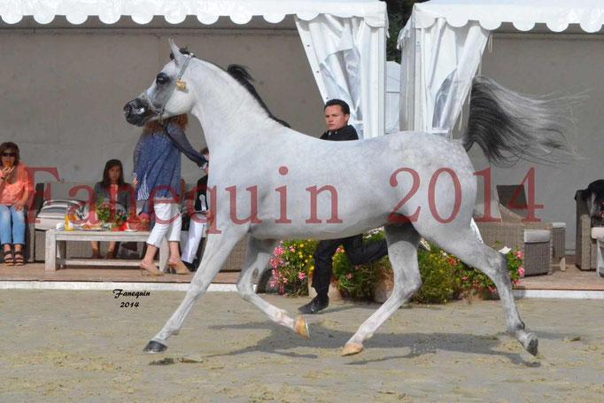CHAMPIONNAT DE FRANCE  2014 A POMPADOUR - Notre Sélection - NADJIK DES AUBUES - 10