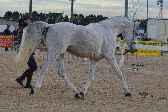 Etalon d'Endurance gris 30