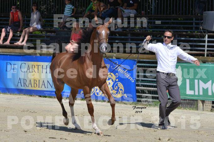 Championnat de FRANCE du cheval ARABE à POMPADOUR 2015 - Classes PROFESSIONNELS - PRIMERIUS EMER - 12