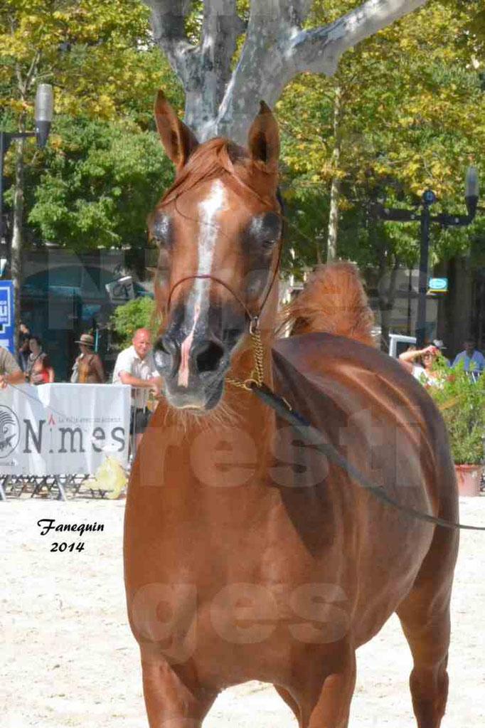 Concours national de Nîmes - MYSS SASKIA - Portraits - 03