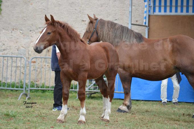 Fête du cheval à Graulhet le 17 septembre 2017 - chevaux de traits - 2