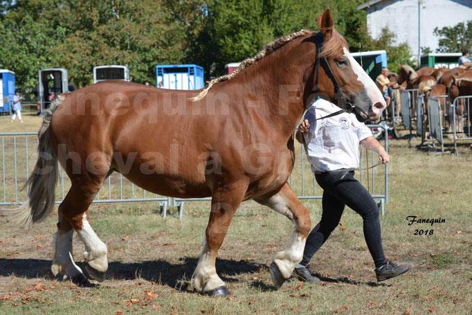 Fête du cheval à GRAULHET le 16 septembre 2018 - Concours Départemental de chevaux de traits - 12