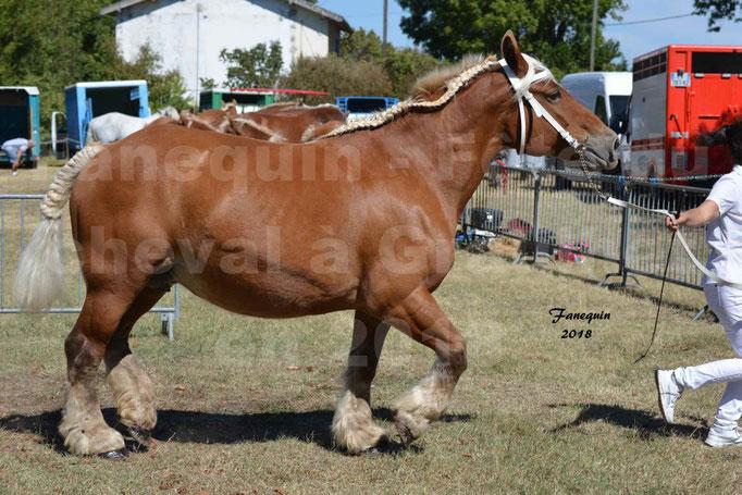 Fête du cheval à GRAULHET le 16 septembre 2018 - Concours Départemental de chevaux de traits - 46