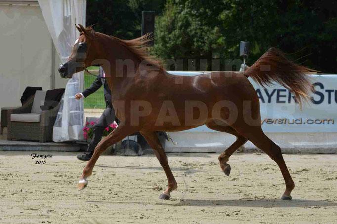 Championnat de FRANCE des chevaux ARABES à Pompadour - PEARL DE DJOON - Notre Sélection - 06