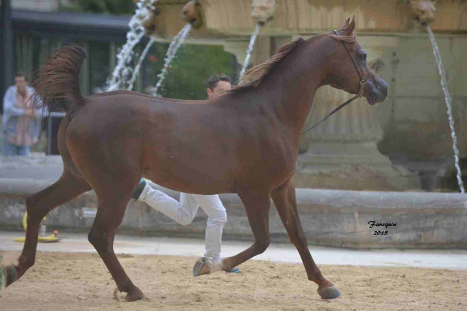 KARAM ALBIDAYER en 2015 - Concours national Nîmes prestige - notre sélection - 10