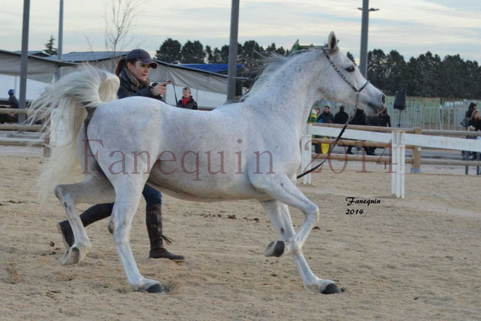Etalon d'Endurance gris 26