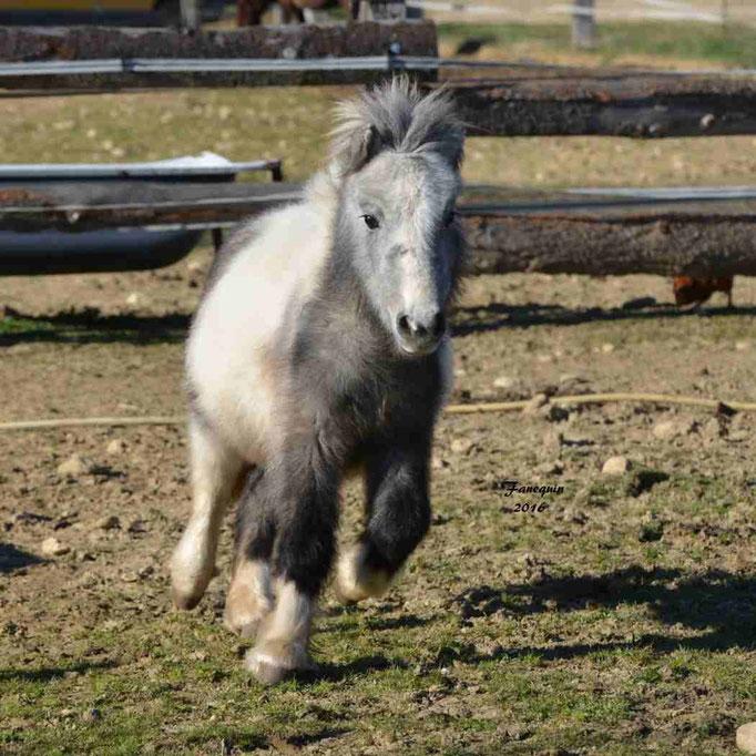 Elevage EL MAGLEP - Groupe de poneys - En Liberté - 14