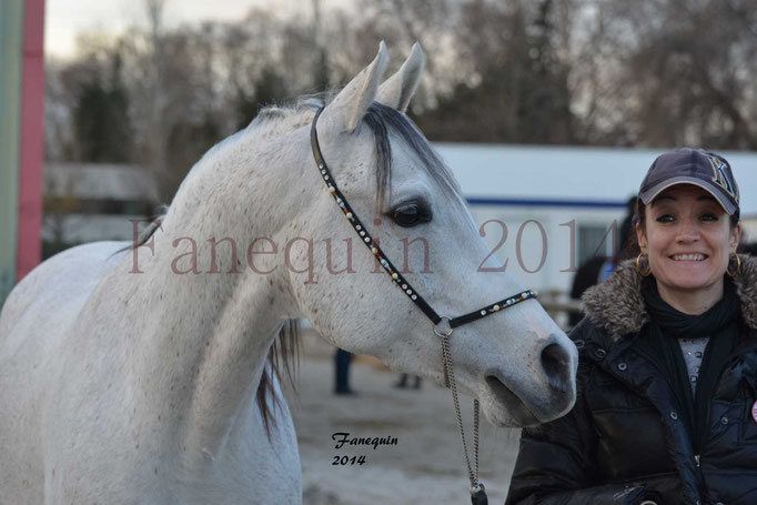 Portrait Etalon d'Endurance gris 1