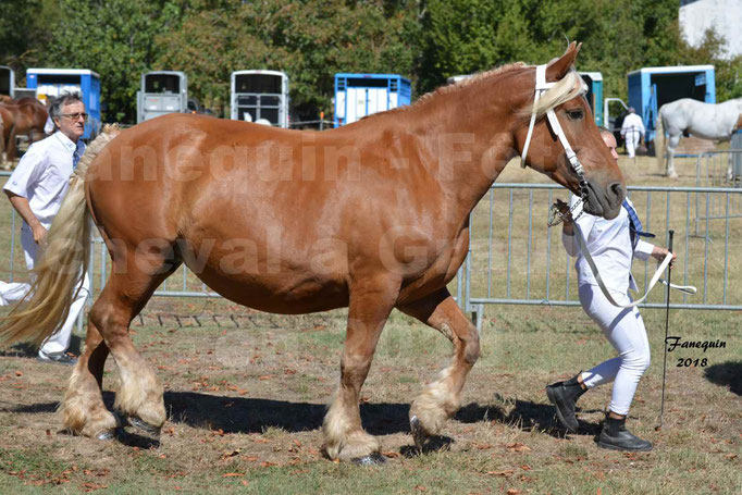 Fête du cheval à GRAULHET le 16 septembre 2018 - Concours Départemental de chevaux de traits - 41
