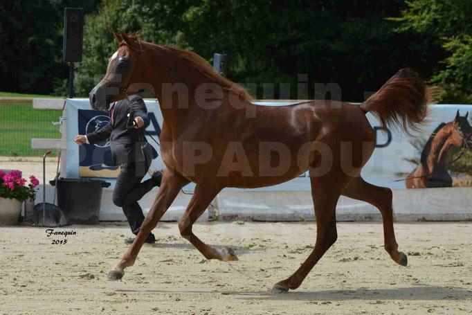 Championnat de FRANCE des chevaux ARABES à Pompadour - PEARL DE DJOON - Notre Sélection - 05