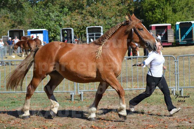 Fête du cheval à GRAULHET le 16 septembre 2018 - Concours Départemental de chevaux de traits - 58