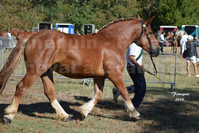 Fête du cheval à GRAULHET le 16 septembre 2018 - Concours Départemental de chevaux de traits - 06