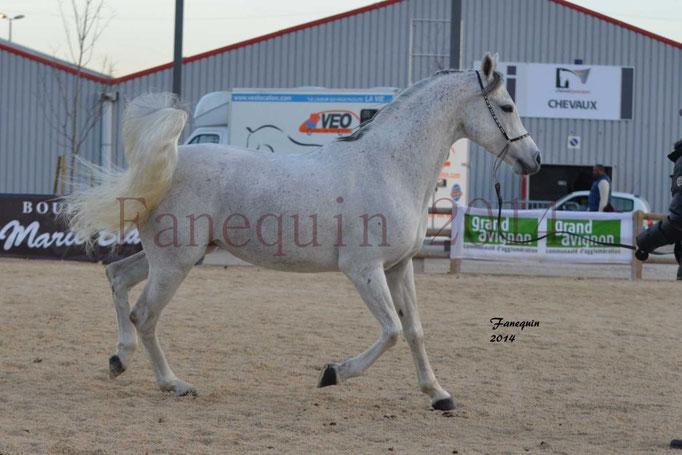 Etalon d'Endurance gris 13