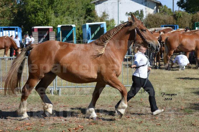 Fête du cheval à GRAULHET le 16 septembre 2018 - Concours Départemental de chevaux de traits - 59