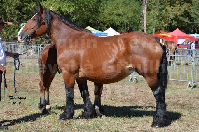 Fête du cheval à GRAULHET le 16 septembre 2018 - Concours Départemental de chevaux de traits - 29