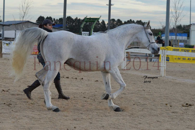 Etalon d'Endurance gris 11