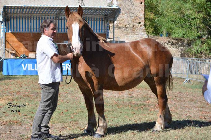 Fête du cheval à GRAULHET le 16 septembre 2018 - Concours Départemental de chevaux de traits - 13