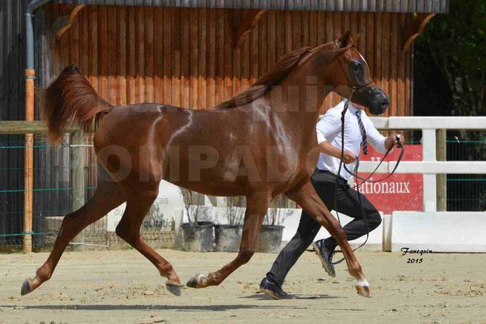 Championnat de FRANCE des chevaux ARABES à Pompadour - PEARL DE DJOON - Notre Sélection - 35