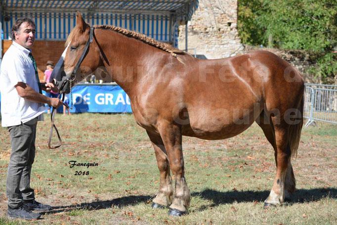 Fête du cheval à GRAULHET le 16 septembre 2018 - Concours Départemental de chevaux de traits - 14