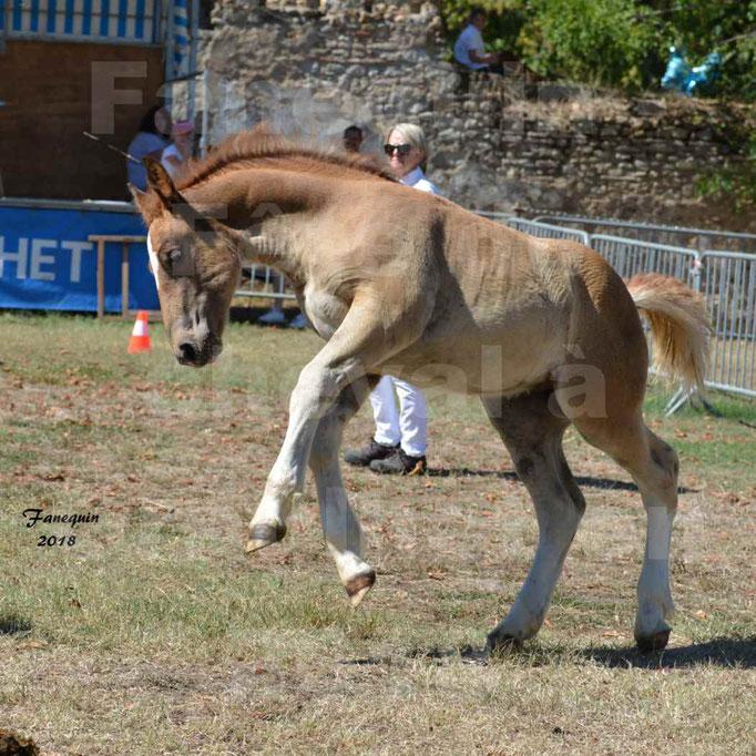 Fête du cheval à GRAULHET le 16 septembre 2018 - Concours Départemental de chevaux de traits - 55