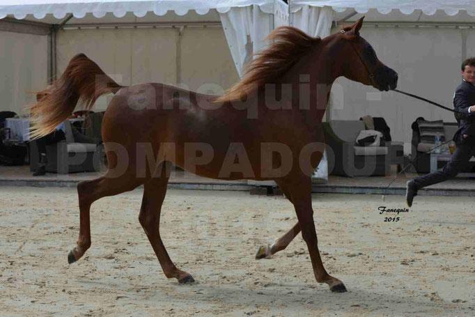 Championnat de FRANCE des chevaux ARABES à Pompadour - PEARL DE DJOON - Notre Sélection - 03