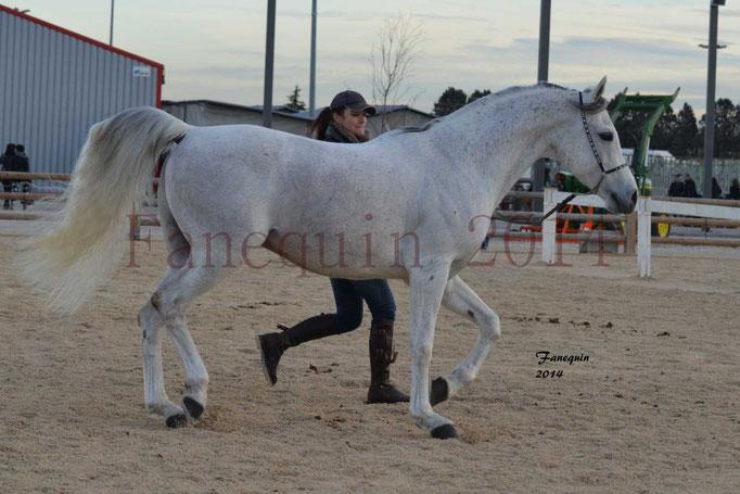 Etalon d'Endurance gris 08