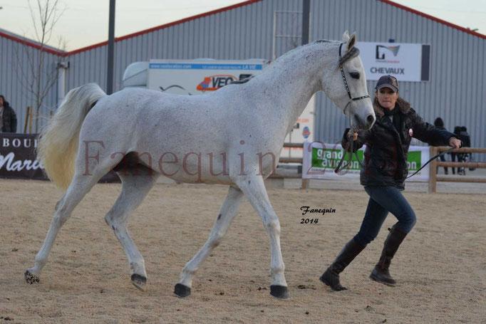 Etalon d'Endurance gris 02