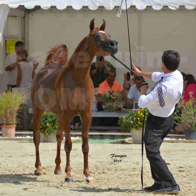 Championnat de FRANCE des chevaux ARABES à Pompadour - PEARL DE DJOON - Notre Sélection - 39
