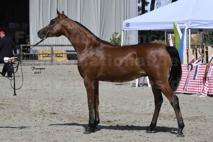 """Concours international de chevaux ARABES - """"Arabian Masters"""" Bordeaux 2017 - JABBOK DE NAUTIAC - 37"""
