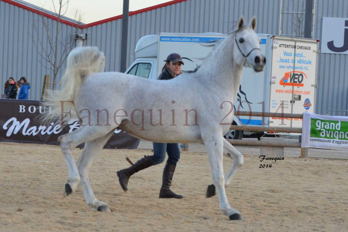 Etalon d'Endurance gris 17