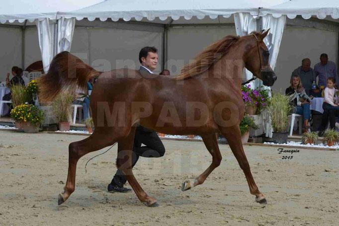 Championnat de FRANCE des chevaux ARABES à Pompadour - PEARL DE DJOON - Notre Sélection - 14